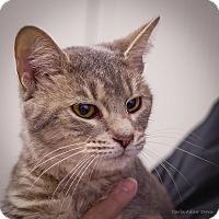 Adopt A Pet :: Lacy $20 - Lincolnton, NC