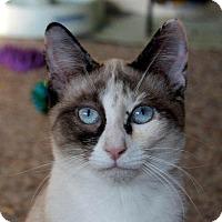 Adopt A Pet :: Pipkin (and Hazel) - Fairfax, VA