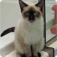 Adopt A Pet :: Collette - Davis, CA