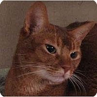 Adopt A Pet :: Paloma - Davis, CA
