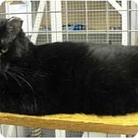Adopt A Pet :: Copper - Mission, BC