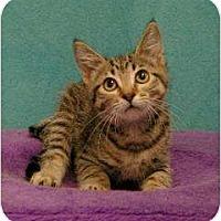 Adopt A Pet :: Olivia - Sacramento, CA