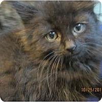 Adopt A Pet :: Mica - Sterling Hgts, MI