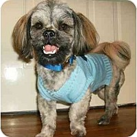 Adopt A Pet :: Robbie - Mooy, AL