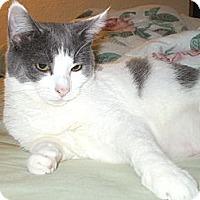 Adopt A Pet :: Cassie - Richland, MI
