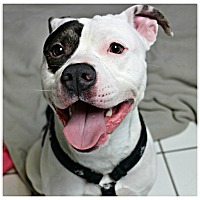 Adopt A Pet :: Rodney - Forked River, NJ