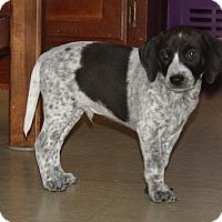 Adopt A Pet :: Motley - Marietta, GA