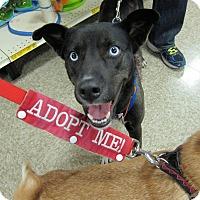 Adopt A Pet :: Oreo - Delaware, OH