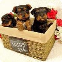 Adopt A Pet :: Raj - Mount Gretna, PA