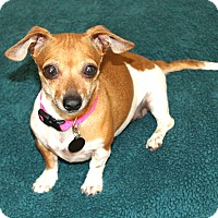 Adopt A Pet :: Lily- I have a video! - Temecula, CA