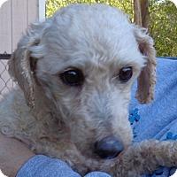 Adopt A Pet :: Lancelot - Crump, TN