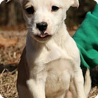Adopt A Pet :: Patsy~adopted! - Glastonbury, CT