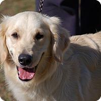 Adopt A Pet :: Karley - Preston, CT