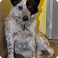 Adopt A Pet :: Chloe (2) - Danbury, CT