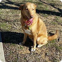 Adopt A Pet :: Tina - Flower Mound, TX