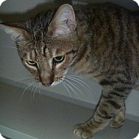 Adopt A Pet :: Mr. Jaffey - Hamburg, NY