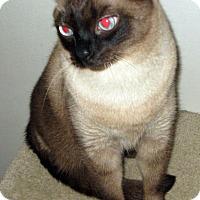 Adopt A Pet :: Simon - San Pedro, CA