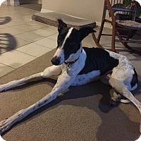 Adopt A Pet :: Wyatt - Tampa, FL