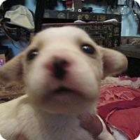 Adopt A Pet :: Stella - San Francisco, CA