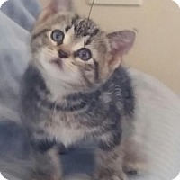 Adopt A Pet :: Gb litter - Aubrey - ADOPTED - Livonia, MI