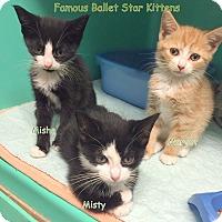 Adopt A Pet :: MARGOT - Cliffside Park, NJ