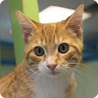 Adopt A Pet :: Run DMC - Indianapolis, IN