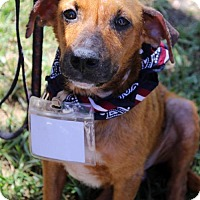 Adopt A Pet :: Brave - San Diego, CA