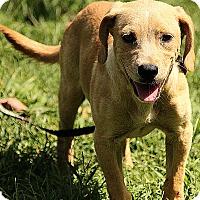 Adopt A Pet :: Cameron - Windham, NH