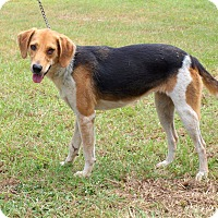 Adopt A Pet :: Penny - Oakdale, LA