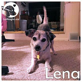 Beagle Mix Dog for adoption in Novi, Michigan - Lena