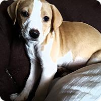 Adopt A Pet :: Josie - Cleveland, OH