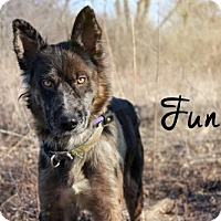 Adopt A Pet :: Funny - Joliet, IL