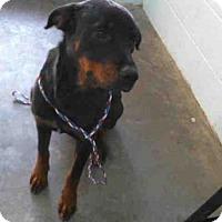 Adopt A Pet :: ELLIE - Tulsa, OK