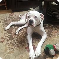 Adopt A Pet :: Winter - Nanuet, NY