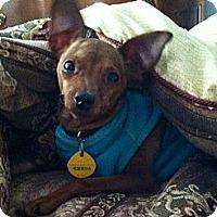 Adopt A Pet :: Cassidy - Huntington Beach, CA
