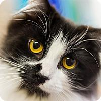 Adopt A Pet :: Oreo - Chesapeake, VA
