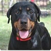 Adopt A Pet :: Stella - Wichita, KS