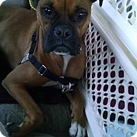 Adopt A Pet :: Cooter - Woodinville, WA