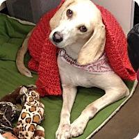 Adopt A Pet :: Sable - Summerville, SC