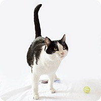 Adopt A Pet :: Wilma - Schererville, IN