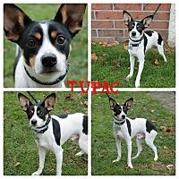 Adopt A Pet :: Tupac - Garden City, MI