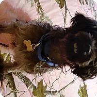 Adopt A Pet :: KENSTON (SRC#1805) in NC NEEDS A FOSTER HOME - Lenoir, NC