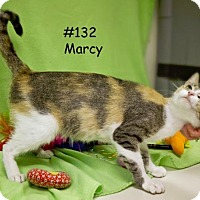 Domestic Shorthair Cat for adoption in Kendallville, Indiana - Marcy