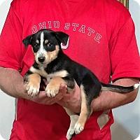 Adopt A Pet :: Matilda - South Euclid, OH