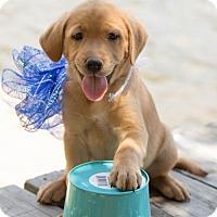 Adopt A Pet :: Alexander Hamilton - West Orange, NJ