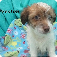 Adopt A Pet :: Preston - Bartonsville, PA