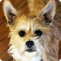 Adopt A Pet :: Winnie - Antioch, CA