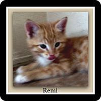 Adopt A Pet :: Remi - Tombstone, AZ