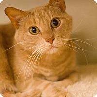 Adopt A Pet :: Todd - Grayslake, IL