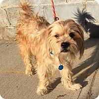 Adopt A Pet :: Liam - Rockaway, NJ